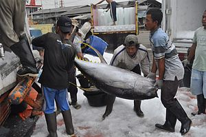 Yellowfin tuna - Yellowfin tuna loaded onto a truck for transportation in Palabuhanratu, West Java