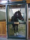 Tiznow horse.jpg