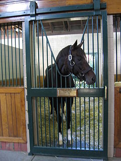 Tiznow American Thoroughbred racehorse