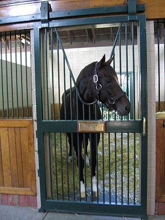 Tiznow - Tiznow standing at Winstar Farms, Kentucky