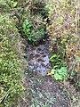 Tomales Point Water Sources- Southwest Section- SW21 - September 3, 2020 (1dd666c9-1478-4e0a-b0c3-3e1881c35c9e).jpg