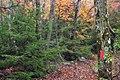 Top Mountain Trail (14) (15577708645).jpg