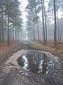 Track off Windsor Ride - geograph.org.uk - 126182.jpg