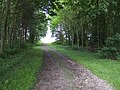 Track through woodland at Bourne End, Bedfordshire - geograph.org.uk - 472667.jpg