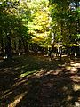 Trail-sun-shining-north-fork - West Virginia - ForestWander.jpg