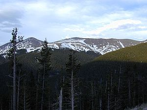 Tree line - In this view of an alpine tree line, the distant line looks particularly sharp. The foreground shows the transition from trees to no trees. These trees are stunted in growth and one-sided because of cold and constant wind.