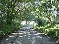 Tree lined road near Stonehall Farm - geograph.org.uk - 2038477.jpg