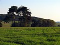 Trees on Farmland at Winterbourne - geograph.org.uk - 71373.jpg
