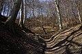 Treppe zum Wiswower Hochufer - Jasmund Nationalpark.jpg