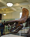 Triceratops, American Museum of Natural History (7171354635).jpg
