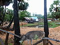 Trincomalee (2).jpg