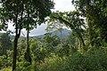 Tropical rainforest, Koh Chang, Thailand.jpg