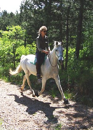 Natural hoof care - Booted horse on a trail ride. (Horse is in a transition period where it cannot be ridden barefoot after shoe removal.)