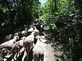 Troupeau de mouton en forêt.JPG