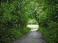 Tunnel verdure.jpg