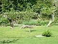 Ty Glyn Walled Garden - The National Garden Scheme - geograph.org.uk - 198003.jpg