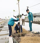 USAID supports tree planting in Nam Dinh Province (33317742985).jpg