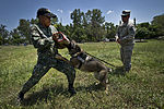 US and Philippine K-9 forces train together during Balikatan 2012 120419-F-MQ656-109.jpg