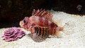 UShaka Sea World 0903.jpg