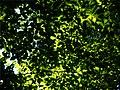 Under canopy (6008767377).jpg