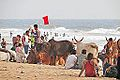 Une plage de Goa (Inde) (13645406974).jpg