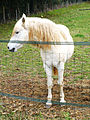 Ury-77477-cheval-02.JPG