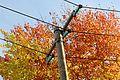 Utility poles in Finland 01.jpg