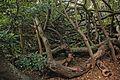 Van Riebeeck's Hedge, Kirstenbosch Botanical Garden, Cape Town-007.jpg