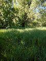 Verhuny, Poltavs'ka oblast, Ukraine - panoramio (71).jpg