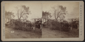 View of downed trees, by Camp, D. S. (Daniel S.).png