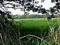 View through a hedge - geograph.org.uk - 522222.jpg