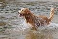Viljo koirarannalla 16.jpg