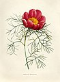 Vintage Flower illustration by Pierre-Joseph Redouté, digitally enhanced by rawpixel 82.jpg