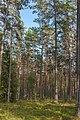 Viru Bog, Parque Nacional Lahemaa, Estonia, 2012-08-12, DD 01.JPG