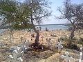 Vue du cimetière de Joal.jpg