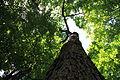 WPQc-161 Parc du Bois-de-Coulonge.JPG