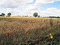 Waiting for the harvest. - geograph.org.uk - 508785.jpg