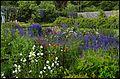 Walled Garden of 'Potting Shed' restaurant, Applecross. - panoramio.jpg