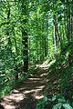 Wanderung Tal der Ilse - Harz - panoramio (2).jpg