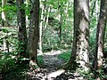 Wanderweg bei der Schwäbischen Alb - panoramio (8).jpg