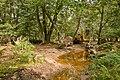 Warwickslade Cutting, fallen beech tree - geograph.org.uk - 1480733.jpg