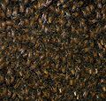 Washington DC Zoo - bees 2.jpg