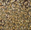 Washington DC Zoo - bees 2.jpg