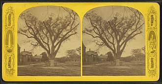 Timeline of Cambridge, Massachusetts - Image: Washington elm, Cambridge, Mass, from Robert N. Dennis collection of stereoscopic views