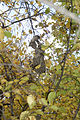 Wasp-Nest-SK.jpg