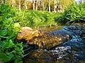 Wasser in vielen Variationen im Bad Mergentheimer Kurpark. 17.jpg