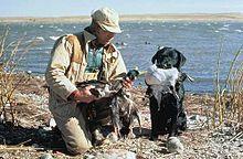 Duck Commander Dog Toys