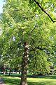 Weilburgpark, Baden 05.jpg