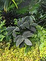 Wet Plant.jpg