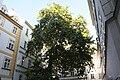 Wien Blutgasse ed 2009 PD 20091007 023.JPG